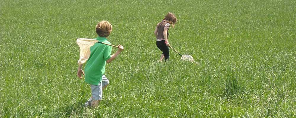 field-nets